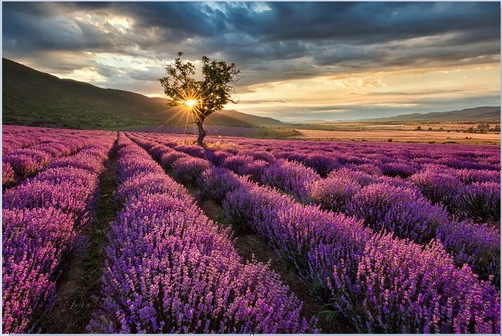 I am obsessed with Lavender. To visit this farm would be a dream for me. OMG.